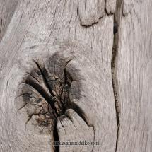 My tree_60x60cm