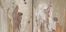 Eucalyptus_diptych_2x 60x60cm