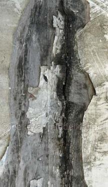 greyish wood_80x140cm